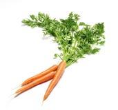 Mazzo di carote Fotografia Stock