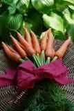 Mazzo di carote Immagine Stock