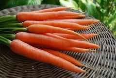 Mazzo di carote Immagini Stock Libere da Diritti