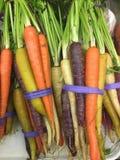 Mazzo di carote organiche variopinte con le foglie verdi Fotografia Stock