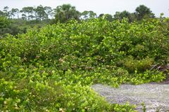 Mazzo di Cocoplum in Florida immagini stock libere da diritti
