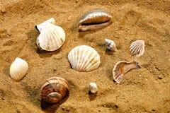 Mazzo di conchiglie nella sabbia su una spiaggia Fotografia Stock