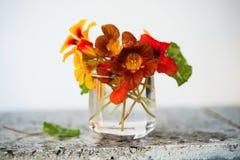 Mazzo di crescione acquatico in vetro fotografie stock