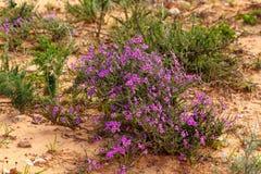 Mazzo di crescita di fiori porpora selvaggia Immagine Stock