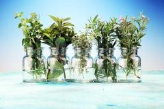 Mazzo di erbe fresche del giardino Fotografia Stock