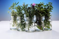 Mazzo di erbe fresche del giardino Fotografie Stock