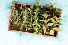 Mazzo di erbe fresche del giardino Immagini Stock