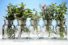 Mazzo di erbe fresche del giardino Immagine Stock Libera da Diritti