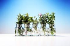 Mazzo di erbe fresche del giardino Immagini Stock Libere da Diritti