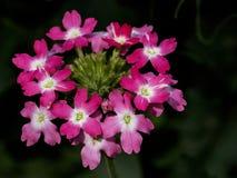 Mazzo di fiori Immagini Stock Libere da Diritti