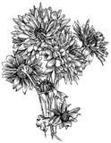 Mazzo di fiori del crisantemo Illustrazione di Stock