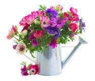 Mazzo di fiori dell'anemone Fotografia Stock