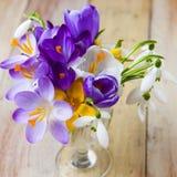 Mazzo di fiori della sorgente Croco e bucaneve sulla parte posteriore di legno Fotografie Stock