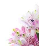 Mazzo di fiori di alstroemeria Fotografie Stock Libere da Diritti