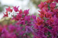 Mazzo di fiori - fondo Immagini Stock
