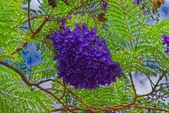 Mazzo di fiori porpora che pende da un ramo di albero fotografie stock