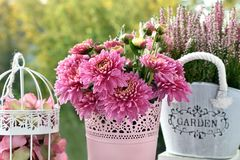 Mazzo di fiori rosa dell'erica e del crisantemo immagine stock libera da diritti