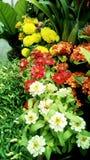 Mazzo di fioritura luminosa del fiore Fotografia Stock
