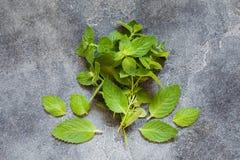 Mazzo di foglia organica verde fresca della menta Fotografia Stock