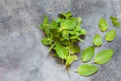 Mazzo di foglia organica verde fresca della menta Immagine Stock