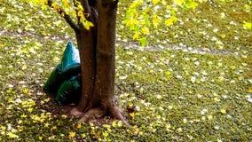 Mazzo di foglie appassite immagine stock