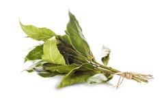 Mazzo di foglie dell'alloro isolate su fondo bianco Fotografia Stock Libera da Diritti