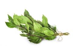 Mazzo di foglie dell'alloro isolate su fondo bianco Fotografia Stock