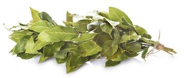 Mazzo di foglie dell'alloro isolate su fondo bianco Immagine Stock