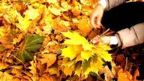 Mazzo di foglie di acero video d archivio