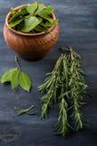 Mazzo di foglie fresche dell'alloro e dei rosmarini Immagine Stock Libera da Diritti