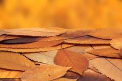 Mazzo di foglie sbiadite della ciliegia Fotografie Stock