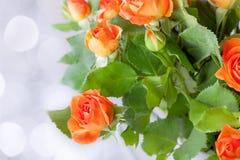 Mazzo di fresco, rose rosse su un fondo bianco Immagine Stock