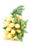 Mazzo di frutta tropicale tailandese (prugna mariana) immagine stock