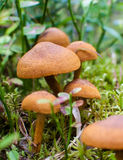 Mazzo di funghi Fotografia Stock
