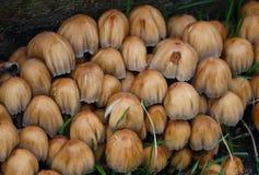 Mazzo di funghi Immagini Stock Libere da Diritti