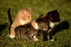 Mazzo di gattini Immagini Stock Libere da Diritti