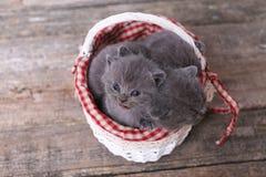 Mazzo di gattini in un canestro Fotografia Stock Libera da Diritti
