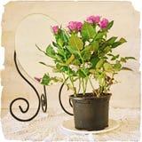 Mazzo di giacinti in un vaso di argilla su vecchia carta Fotografie Stock Libere da Diritti
