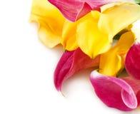 Mazzo di gigli gialli e rosa di cala Fotografie Stock