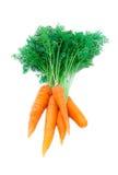 Mazzo di giovane carota fresca Fotografia Stock Libera da Diritti