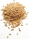 Mazzo di granulo del frumento   immagini stock