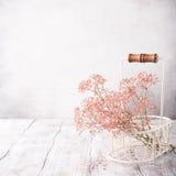 Mazzo di Gypsophila rosa Fotografia Stock