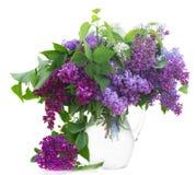 Mazzo di lillà in vaso Fotografia Stock Libera da Diritti
