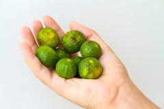 Mazzo di mandarini di Nasnaran Immagine Stock Libera da Diritti