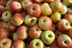 Mazzo di mela Immagine Stock