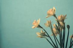Mazzo di narcisi gialli della primavera sul fondo del turchese fotografia stock libera da diritti