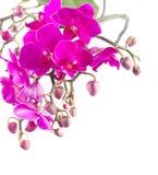 Mazzo di orchidee viola Fotografia Stock