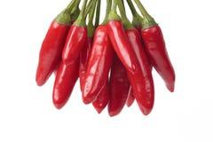 Mazzo di peperoni di peperoncino rosso Fotografie Stock