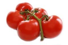 Mazzo di pomodori Immagini Stock