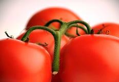 Mazzo di pomodori Fotografia Stock